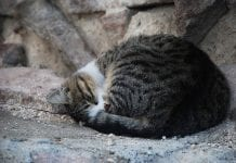 Finding the purr-fect home could be return to roots